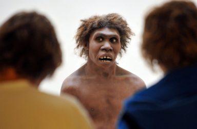 إنسان النياندرتال كان ينطق بكلمات مشابهة للإنسان الحالي - لدى سلالة النياندرتال القدرة على السماع وإصدار أصوات الكلام نفسها التي لدى الإنسان المعاصر