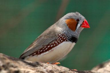 تملك الطيور حاسة كمومية غريبة، وتمكن العلماء الآن من رؤيتها في الواقع - التفاعل بين فيزياء ميكانيكا الكم والكيمياء الحيوية عند الطيور