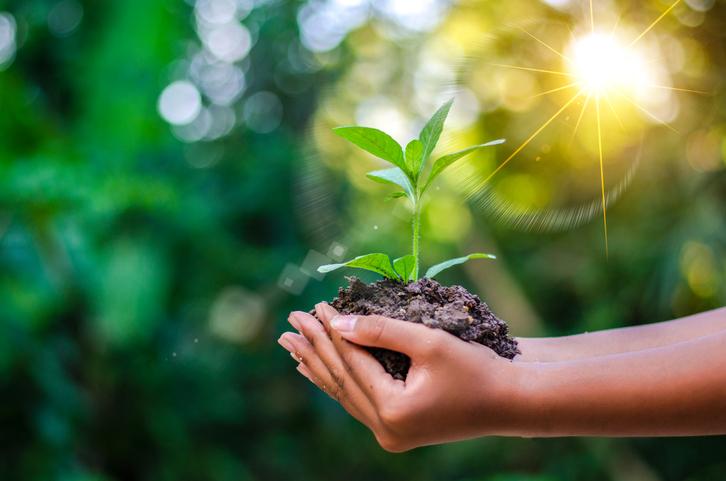 وفقًا للعلم سنستعرض مدى تأثير زراعة الأشجار على المناخ