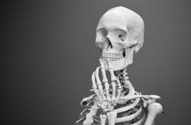 نوع جديد من الخلايا العظمية قد يساعد على علاج هشاشة العظام - اكتشف باحثون نوعًا جديدًا من الخلايا العظمية يساهم في علاج هشاشة العظام