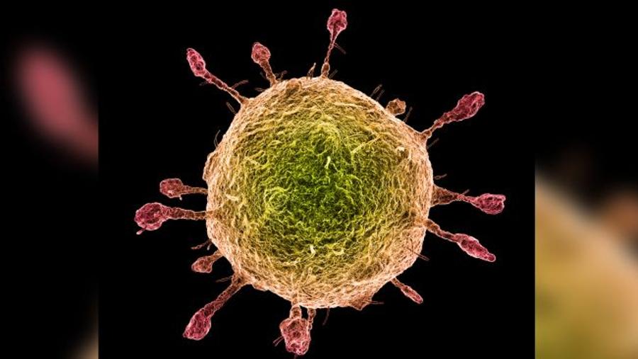 مقارنة بين فيروس كورونا الجديد وفيروس الإنفلونزا: أيهما أخطر؟