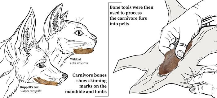 سُلِخت اللواحم واستُخدمت الأدوات العظمية لتحضير الفراء. (جاكوبو نيكولو سيراسوني، 2021).