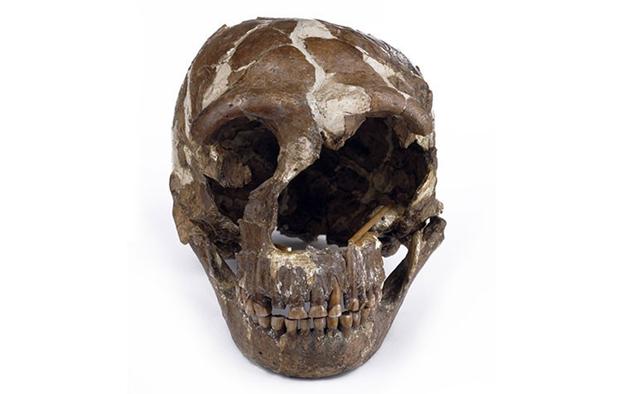 جمجمة أنثى إنسان نياندرتال، اكتُشفت في كهف تابون في جبل الكرمل في إسرائيل. تُعرف بتابون 1، يبلغ عمر هذه الحفرية نحو 130 ألف سنة