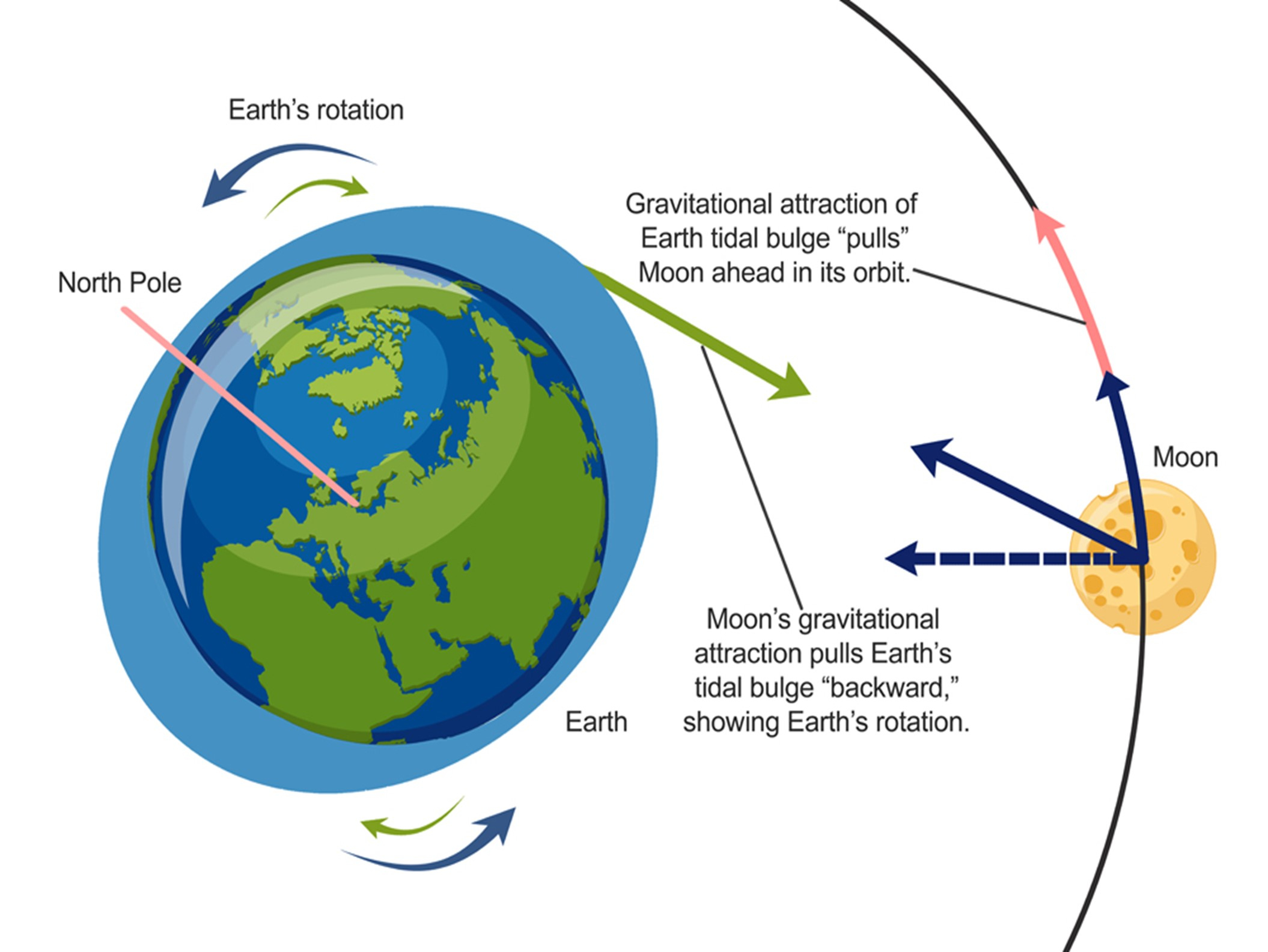 يؤدي امتداد محيطات الأرض إلى زيادة نصف قطر مدار القمر حول كوكبنا.