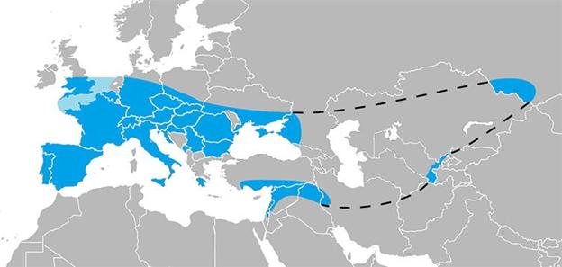 خريطة توضح انتشار النياندرتال