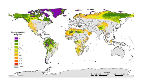 قد تؤدي إعادة توطين 1-5 أنواع في العديد من المناطق البرية إلى تعزيز سلامتها البيئية