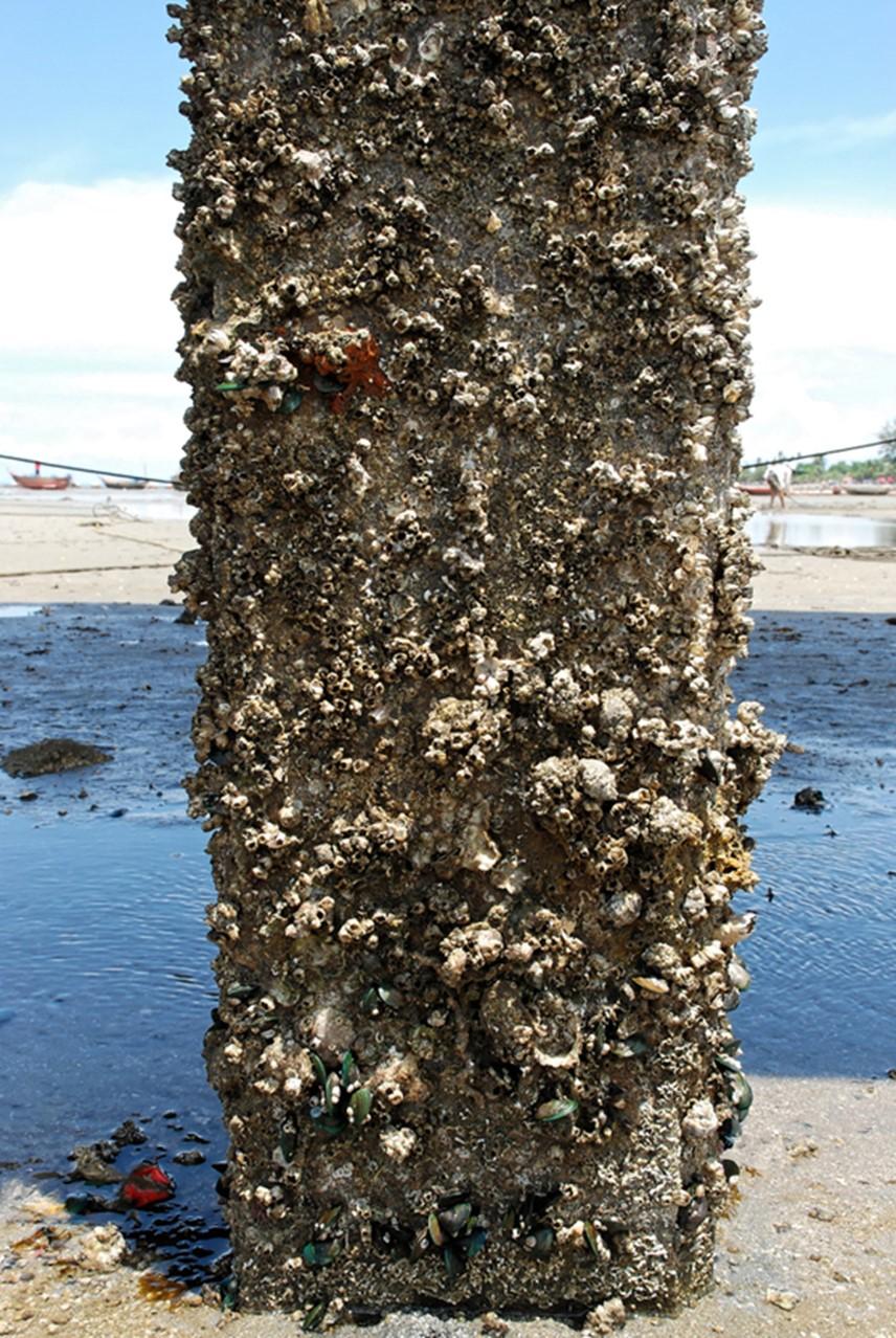 كائنات الحشف الحيوي البحرية على هيكل صلب