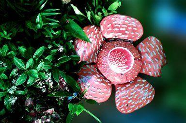 النباتات الطفيلية تستخدم جينات مسروقة لكي تصبح أكثر تطفلًا النبات الطفيلي يسرق كمية كبيرة من جينوم النبات المضيف المادة الوراثية