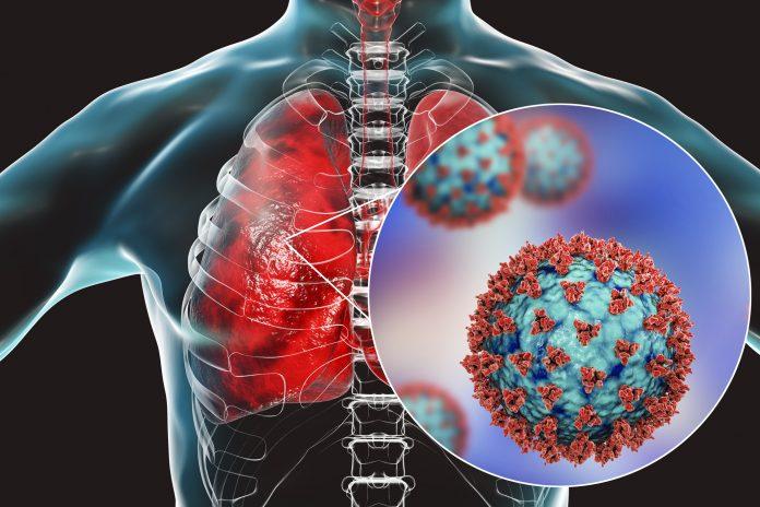 كيف يهاجم فيروس كورونا أعضاء الجسم المصاب؟