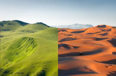 هل يمكن تحويل الصحاري إلى غابات - تخضير الصحراء - تحويل المساحات الشاسعة من الرمال في الصحاري إلى غابة مورقة - استصلاح الصحراء