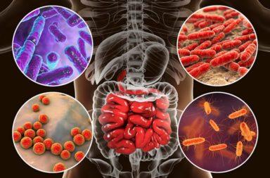 اكتشاف دور مهم لبعض جراثيم الجسم في مكافحة السرطان - العلاج المناعي للسرطان - التعرف على الخلايا السرطانية ومهاجمتها في بعض أنواع السرطانات