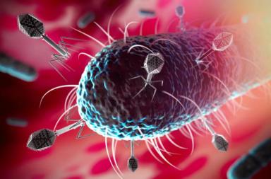 اكتشاف الكائن الذي يأكل الفيروسات - شبكة ممتدة تشمل الكائنات المنتجة والمستهلكة والرمية وآكلات الجيف - كائنات تتغذى على الفيروسات - العوالق