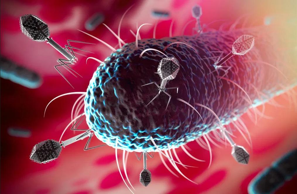 اكتشاف الكائن الذي يأكل الفيروسات