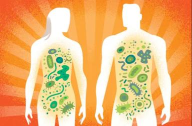 ما هي الميكروبيوتا البشرية - تعيش ملايين الأحياء الدقيقة من الجراثيم والميكروبات في أمعاء الإنسان - البيئة الداخلية لجسم الإنسان