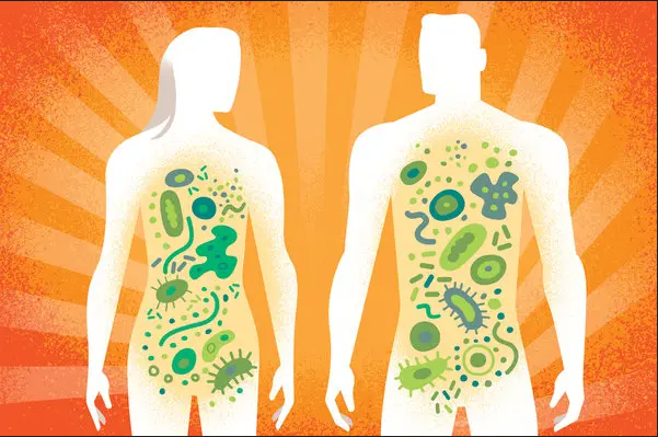 ما هي الميكروبيوتا البشرية؟
