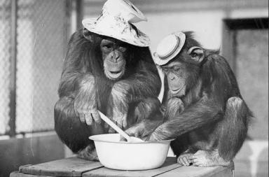 تمامًا مثل البشر، يركز الشمبانزي على بناء صداقات متينة عند التقدم بالسن - سلوك ذكور الشمبانزي يتشابه إلى نحو كبير مع سلوك الإنسان مع تقدم كل منهما في السن