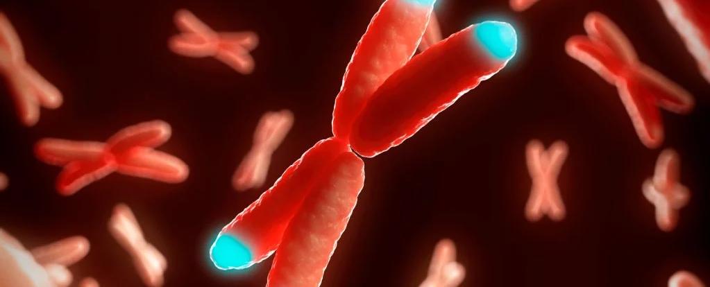 استطاع العلماء لأول مرة عكس الشيخوخة الخلوية جزئيًا لدى البشر - تناقص طول القلنسوة الطرفية المغطية لنهايات صبغياتنا أو ما يسمى «التيلوميرات»