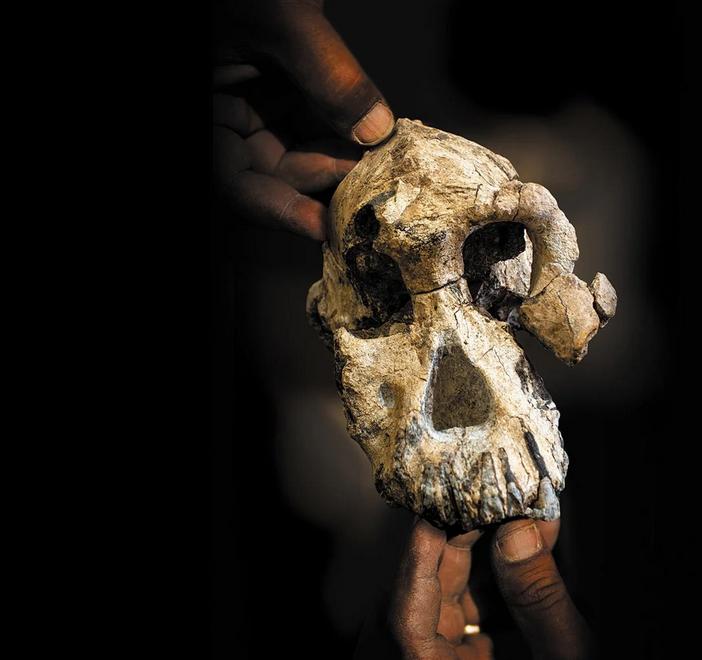 جمجمة سلف الإنسان قبل سبعة ملايين عام قد لا تكون مثلما نظن