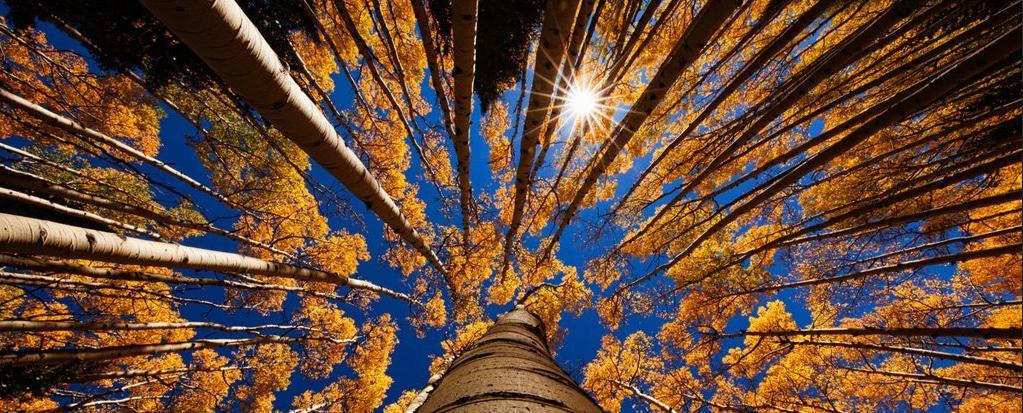 ألف عام من تاريخ الشمس مكتوب في الأشجار - الأنشطة ذات الإيقاعات المختلفة التي تمر بها الشمس - النشاط الشمسي - حلقات الأشجار - الكربون المشع
