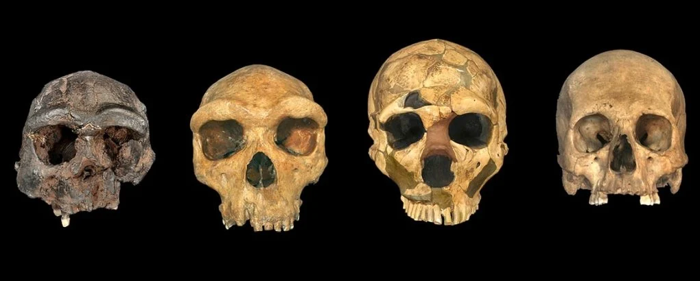 هل يمكننا تتبع أصل الإنسان المعاصر إلى أي نقطة مفردة من الزمان أو المكان - السجل الأحفوري لأسلاف البشر - كيف تطور الإنسان الحديث