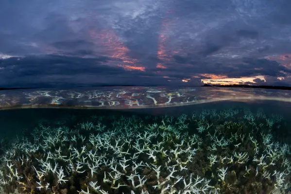 الاحتباس الحراري يغير منظومة المحيطات