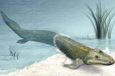 ربما استطاعت الفقاريات الأولى المشي في أعماق المحيط قبل الانتقال إلى اليابسة - انتقال الفقاريات عند انتقالها من الماء إلى اليابسة - سمكة المتزلج الصغيرة
