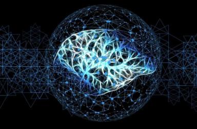 كيف تستعيد أدمغتنا مفاهيم ما نعرفه عن العالم؟ - المناطق الدماغية متخصصة النمط التي تعالج الانطباعات الحسية الفردية أو الأفعال