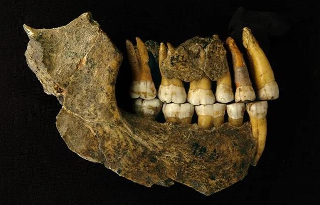 حفرية مجمّعة للفكين العلوي والسفلي تعود لإنسان النياندرتال مستخرجة من كهف الجاسوس. مصدر الصورة: (Patrick Semal/RBINS/AFP)