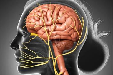 الأعصاب القحفية (6): العصب المبعد - العصب المسؤول عن عن حركة العضلة المستقيمة الوحشية - بنية وموقع وتشريح العصب القحفي السادس