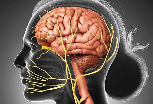 الأعصاب القحفية (6): العصب المبعد