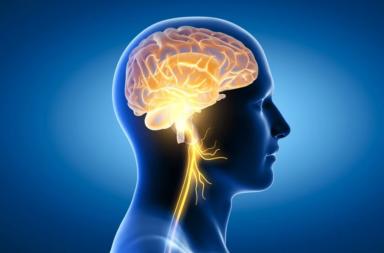 تشريح العصب المبهم ووظيفته وما هي الاستجابة الوعائية المبهمة - العصب المسؤول عن التحكم في العديد من عضلات الحلق والحنجرة و تنظيم معدل ضربات القلب
