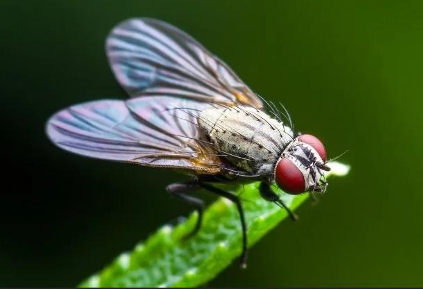ربما تطورت أجنحة الحشرات من أرجل القشريات