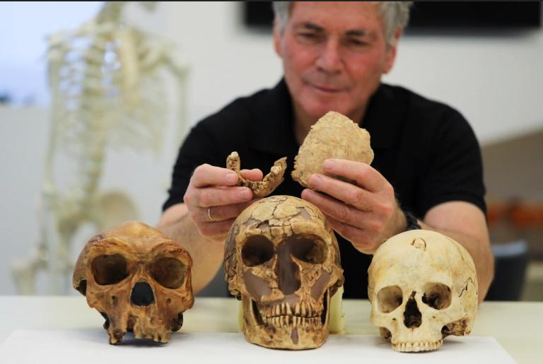 اكتشاف أجزاء من جمجمة وفك سفلي لسلف إنسان النياندرتال لكنه لا يشبه شكل الإنسان الحديث إطلاقًا - اكتشاف جمجمة أحد أسلاف البشر المسمى هومو نيشر الرملة