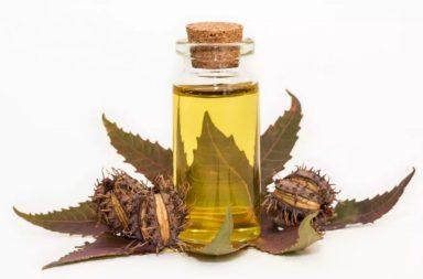 فوائد الزيت المستخرج من بذور نبات الخروع الشائع - الاستخدامات الطبية والصناعية والصيدلانية لزيت الخروع - ما الحالات اليعالجها زيت الخروع؟