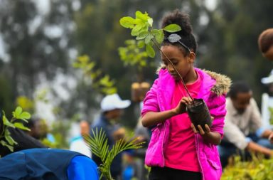 إذا زرع كل شخص شجرة كل عام، ما سيكون تأثير ذلك على المناخ بعد 20 سنة؟ هل يمكن إبطاء التغير المناخي عن طريق زراعة عدد هائل من الأشجار؟ حماية الأشجار