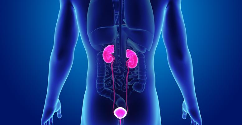 رضوض الجهاز البولي: الأسباب والعلاج - أذية في السبيل البولي التناسلي غير مهددة للحياة - أذيات الجهاز البولي - تصوير البطن بالإيكو