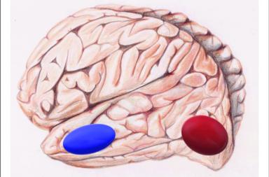 يولد البشر بأدمغة معدة مسبقًا لقراءة الكلمات - إجراء عمليات مسح الدماغ لمجموعة من الأطفال حديثي الولادة - منطقة تشكيل الكلمات المرئية