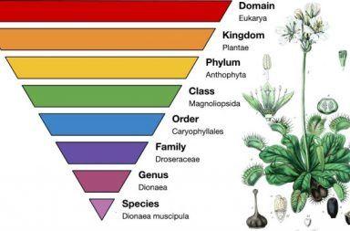 علم التصنيف ترتيب الكائنات الحية إلى مجموعات علم تسمية الكائنات الحية ووصفها وتبويبها كيف يقوم العلماء بتسمية الكائنات الحية الفصائل