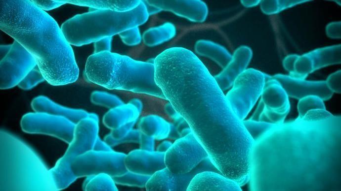 ما هو عدد الخلايا البكتيرية في جسم الانسان ؟