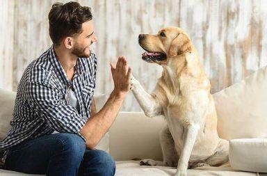 دراسة تكشف عن التغيرات التي طرأت على أدمغة الكلاب عبر القرون بفعل البشر دراسة حديثة تكشف عما فعله البشر بأدمغة الكلاب تطور الكلاب