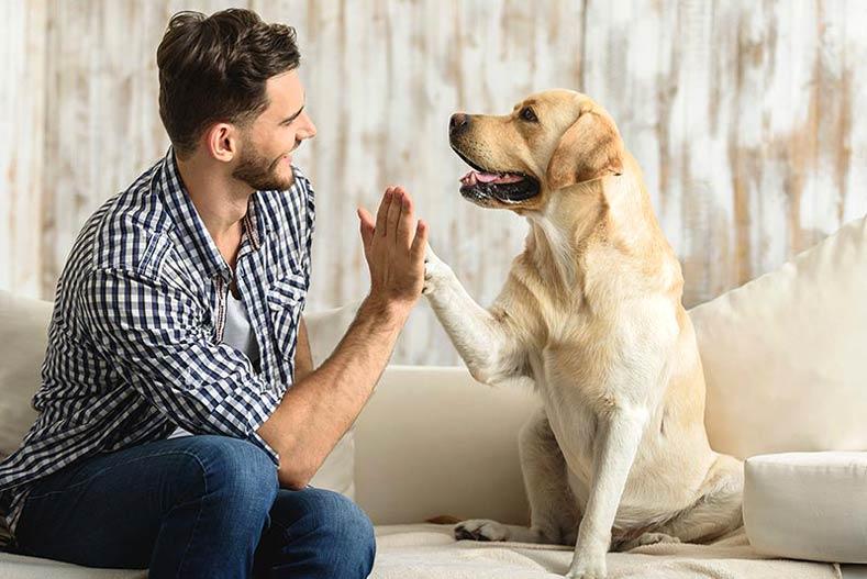 دراسة تكشف عن التغيرات التي طرأت على أدمغة الكلاب عبر القرون بفعل البشر