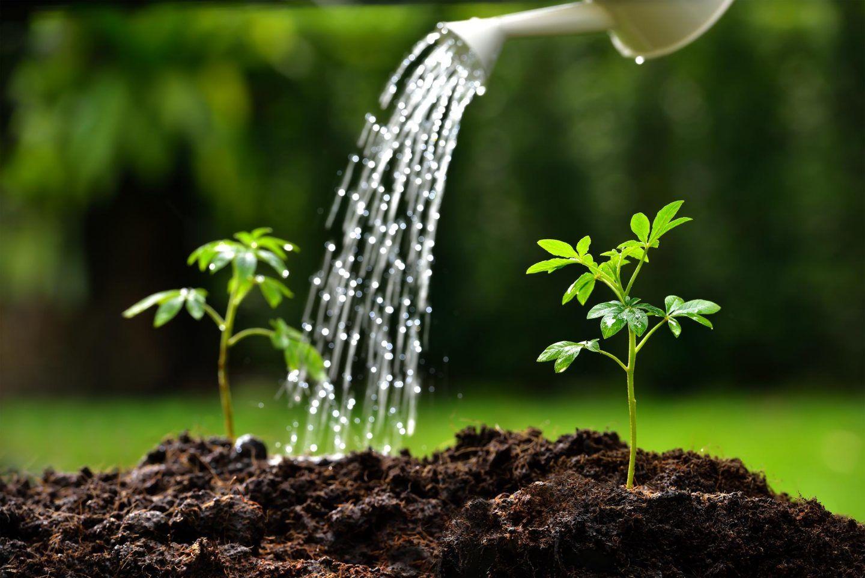 هل تسمع النباتات صوت الماء؟
