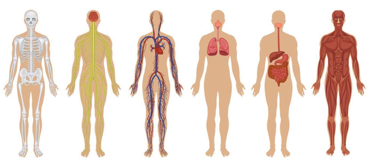العلم يكذب 10 خرافات حول جسم الإنسان !