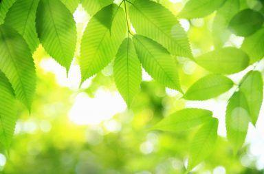عملية البناء الضوئي كيف يحدث التركيب الضوئي التمثيل كيف تنتج البكتيريا الطاقة اللازمة لحياة النبات الكلوروفيل الصانعات الخضراء البلاستيدات