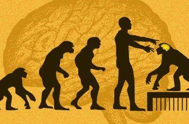 البحث عن كيفية تطور الذكاء البشري يثير بعض الأسئلة الأخلاقية تطوء الذكاء عند السعادرين أسلاف البشر القردة الجينات البشرية