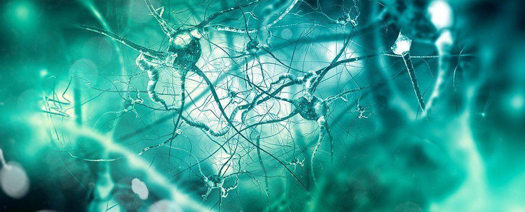 قد يبدأ مرض ألزهايمر خارج الدماغ، في مكان آخر في الجسم