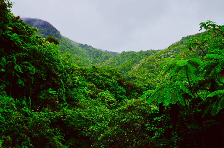 العلماء يحذرون: غابات الأمازون قد تزيد التغير المناخي سوءًا!