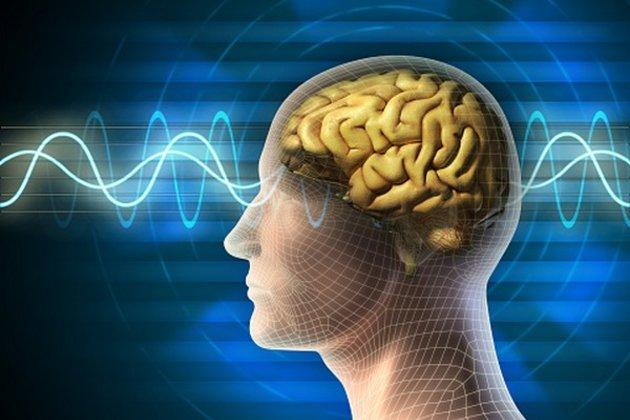 جهاز جديد: دماغ حاسوبي يحاكي التعلم البشري