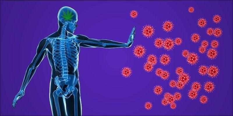 وجد العلماء طريقة جديدة تمامًا لإبطاء أمراض المناعة الذاتية