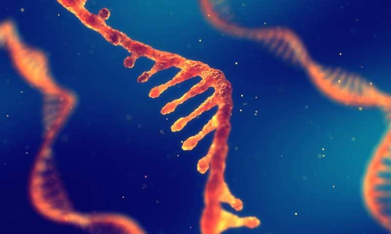 الحمض النووي الريبوزي (الريبي) RNA